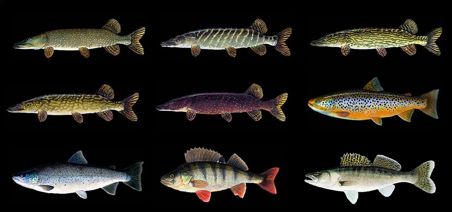 Click the pic to see other fish stickers for decoration!